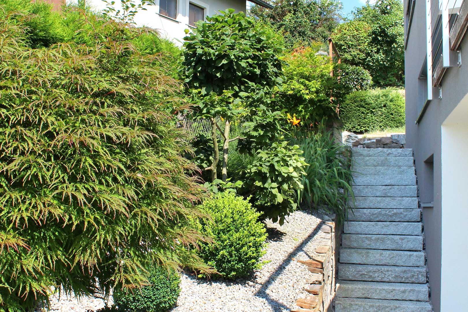 Hausgarten Grünpflanzen
