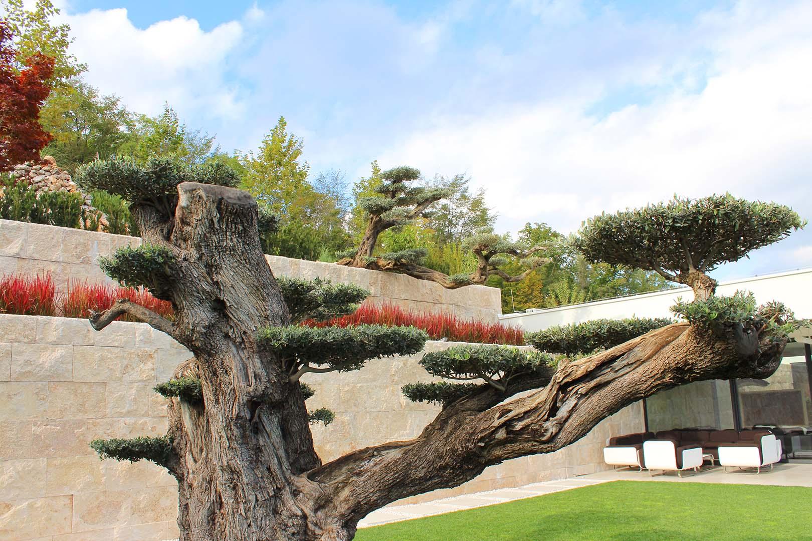 Gartendesign Baum